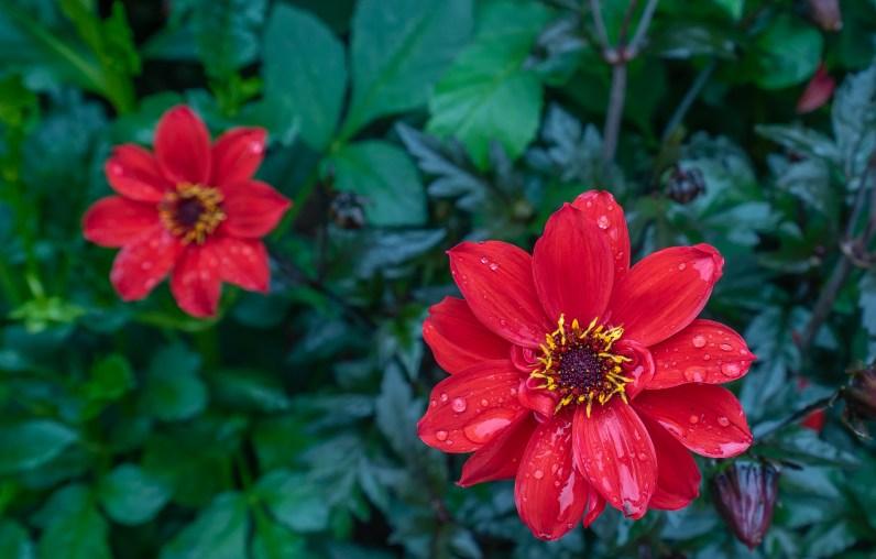 Glistening Flower 3