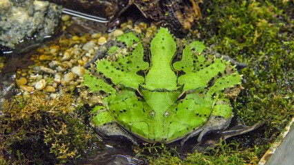 green frog (1 of 1)
