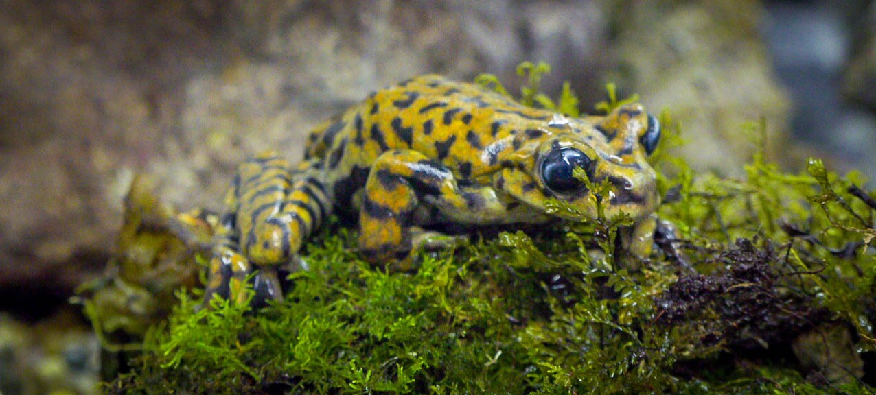 speckled frog (1 of 1)