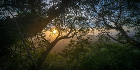 Sunrise-Through-the-Jungle