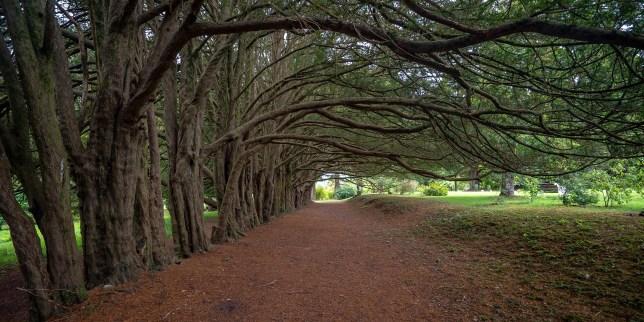Tree-Lane