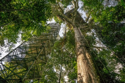 Canopy Tower from Below