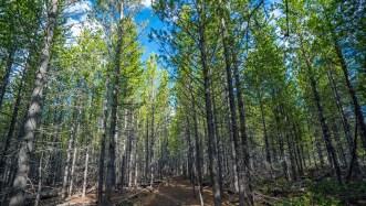 Piines Trail