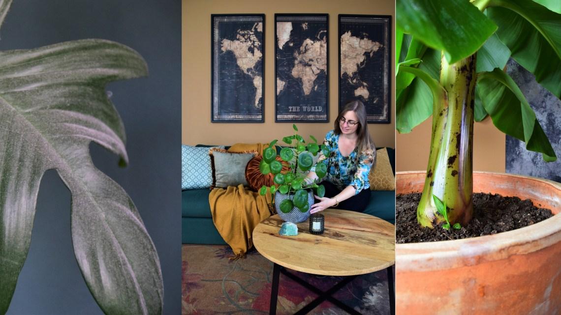 Met deze verzorgingstips geniet je langer van jouw kamerplanten! (Deel 2)