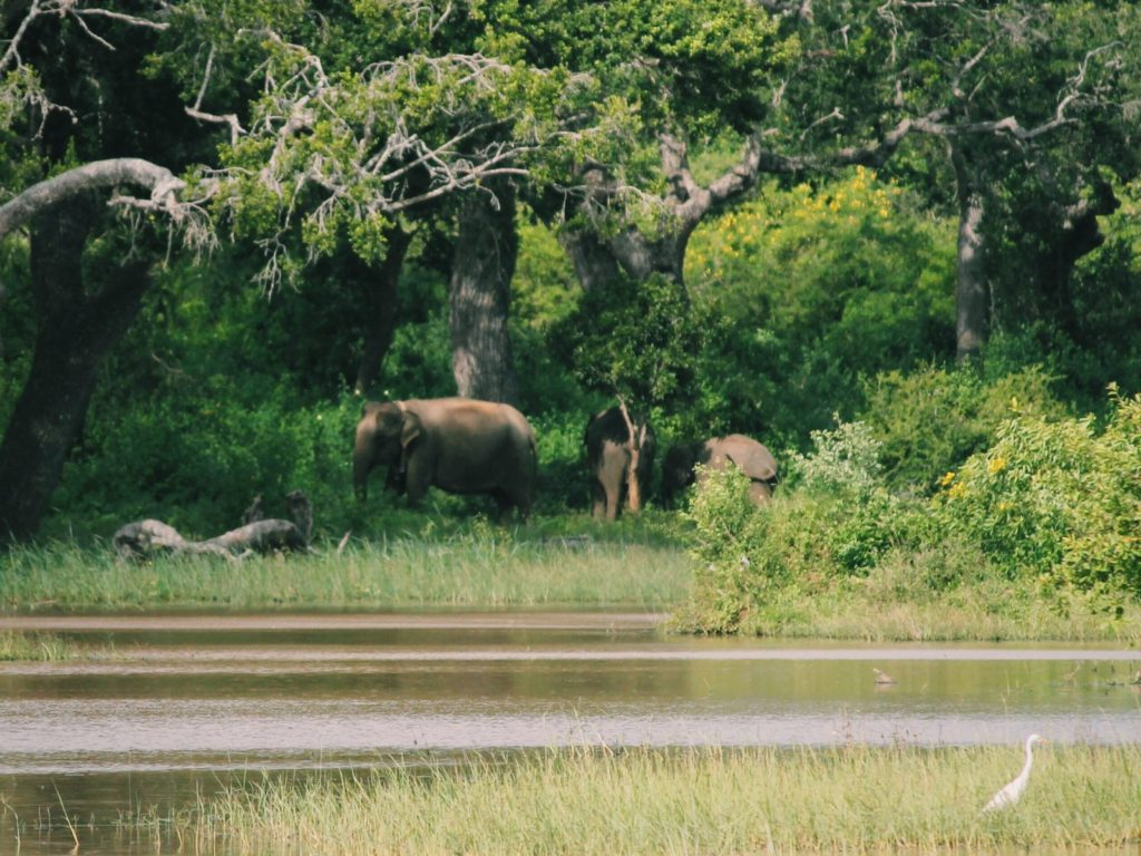 Elephants in the distance on safari