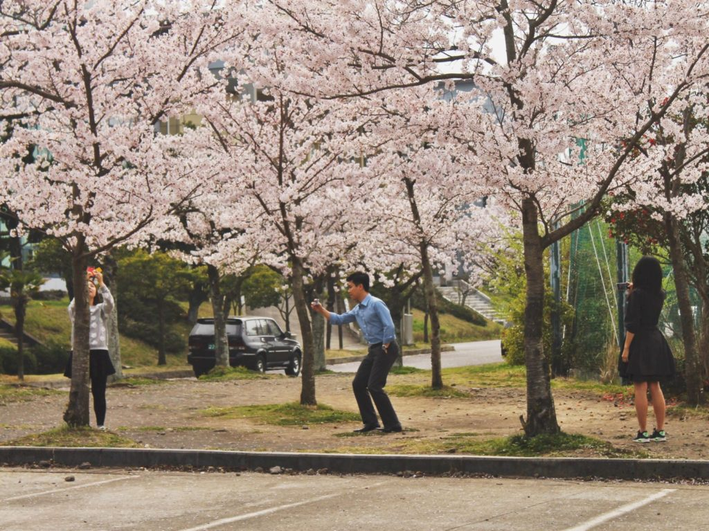 Korean cherry blossom selfies during spring in Korea
