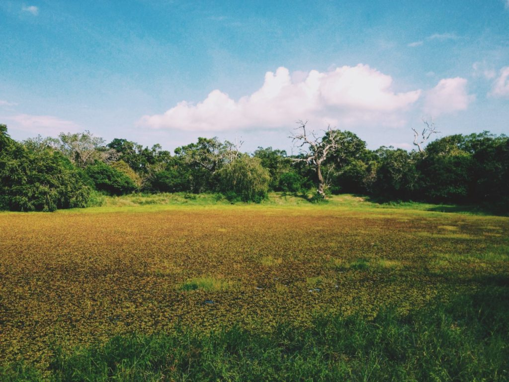 Scenery at Yala National Park