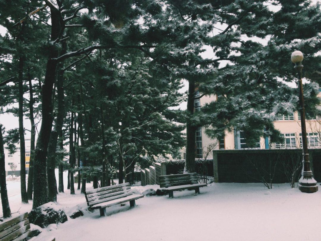 Winter Wonderland Park
