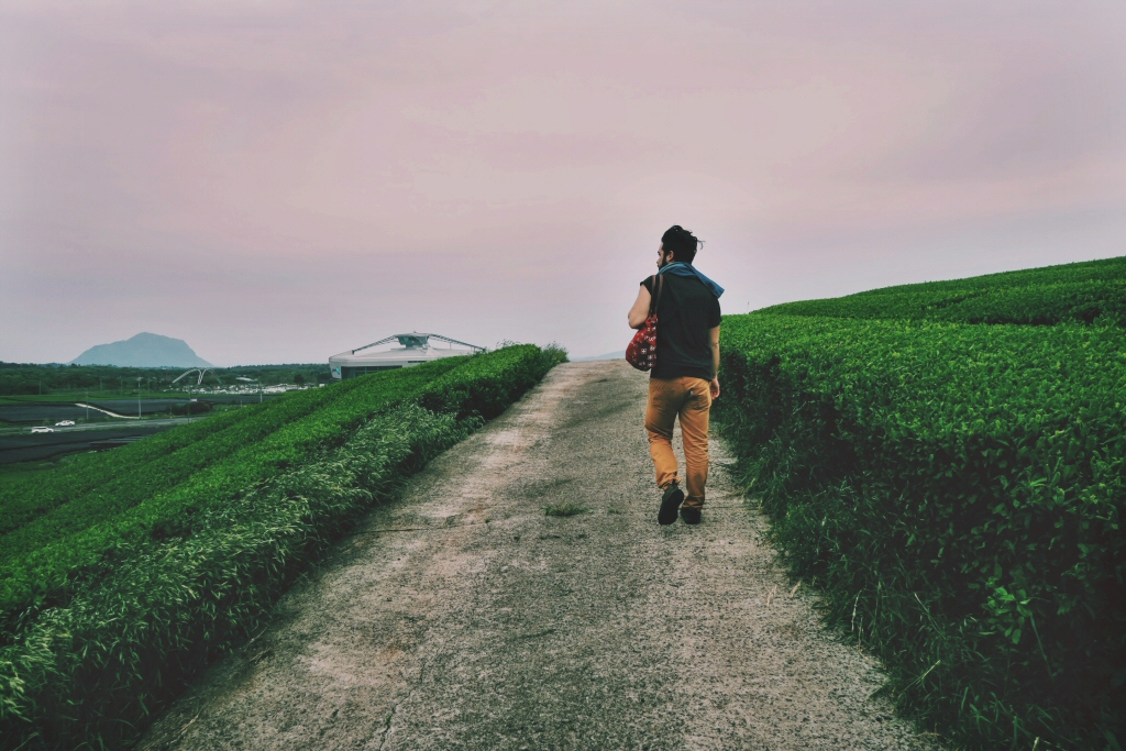 Ben walking through the green tea field on Jeju Island, South Korea