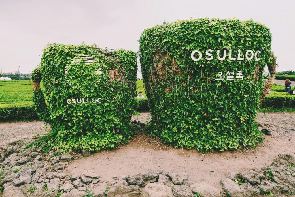 O'Sulloc Tea Mug Sign on Jeju Island