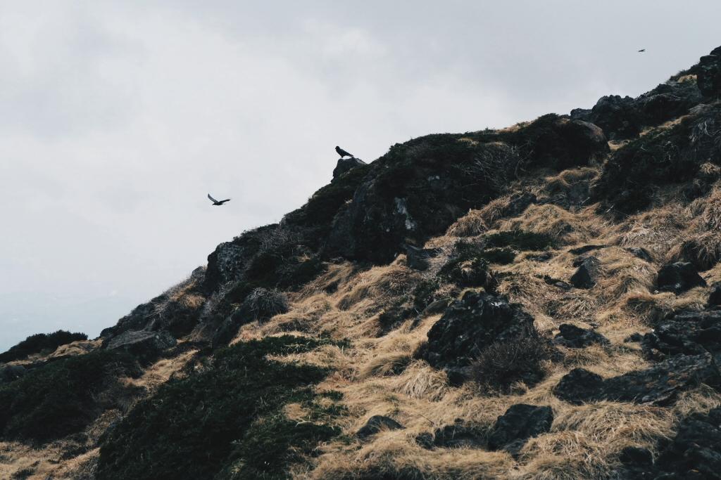 Birds on Hallasan Mountain on Jeju Island