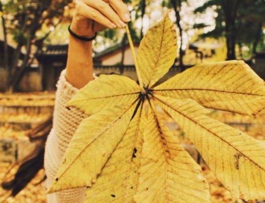 Autumn Travel Destinations according to Travel Bloggers