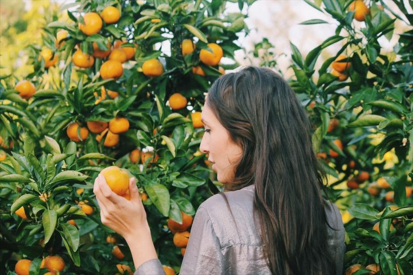 Jeju Tangerine Picking