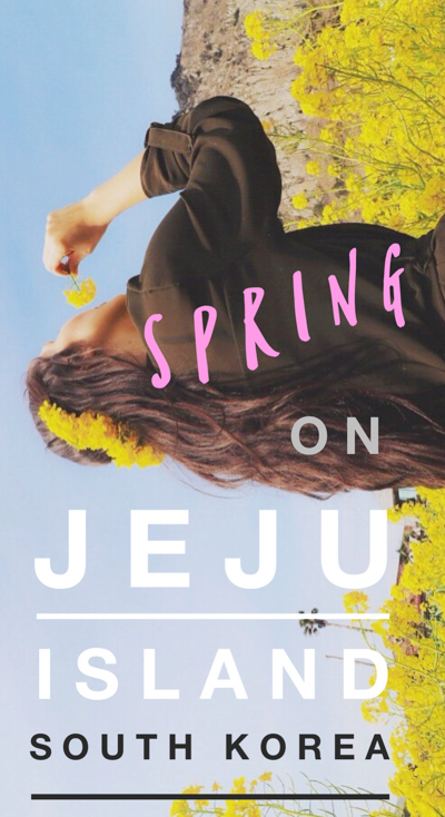 A list of the best things to do in Jeju Island, Korea to witness the spectacle of spring in South Korea, from Korean cherry blossom trees to canola flowers!