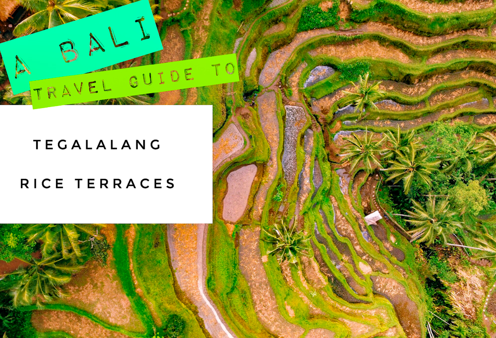 Our Bali travel guide to the Tegalalang Rice Terraces (Tegallalang Rice Terraces), with tips and tricks to enjoy the famous jungle rice paddies in Ubud, Indonesia without the crowds!