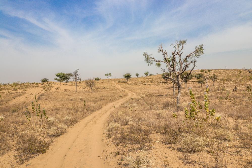 Thar desert location for Jeep safari