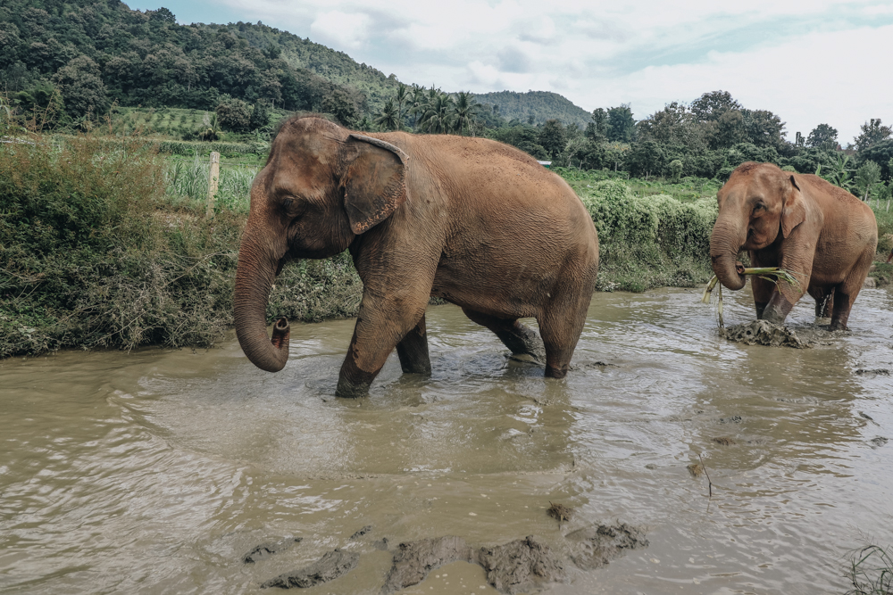 Bathing elephants in Thailand