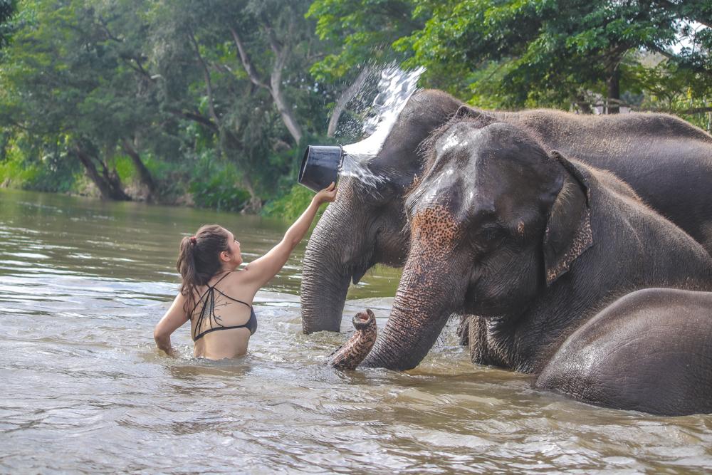 Getting to bathe Thailand elephants