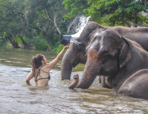 Getting to bathe Thailand elephants