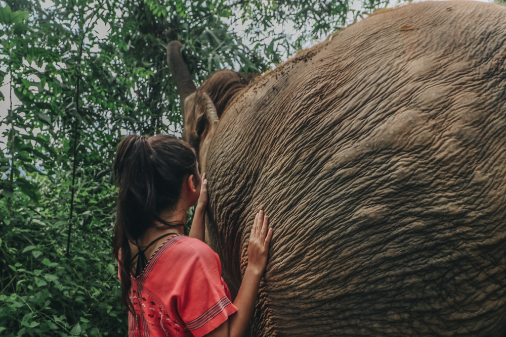 Thailand elephant volunteer experience