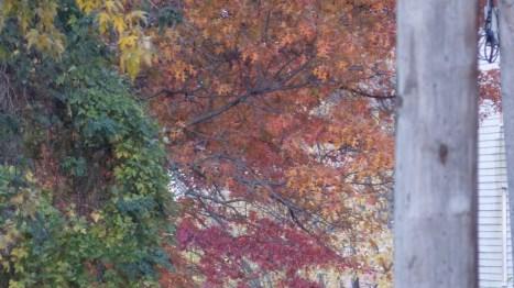 cropped-dscn0081.jpg