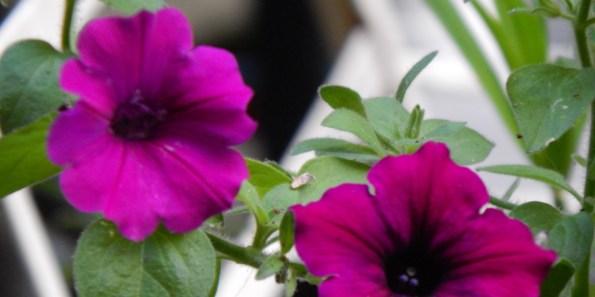 cropped-dscn1407.jpg