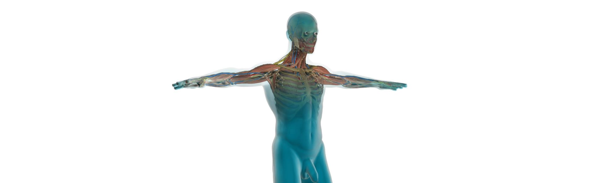human-anatomy – tell