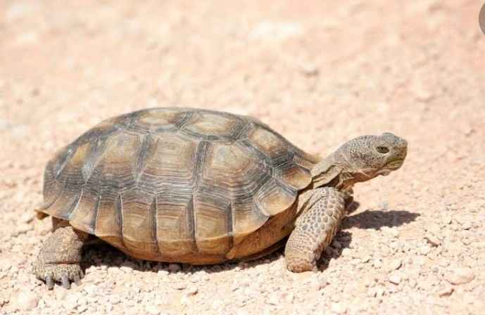 The Tortoise and His Meal Ticket