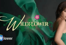 Wildflower TV3 Full Story, Summary, Plot, Casts and Teasers