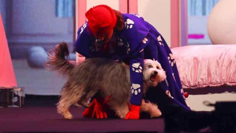 Dog act Ashleigh and Sully.