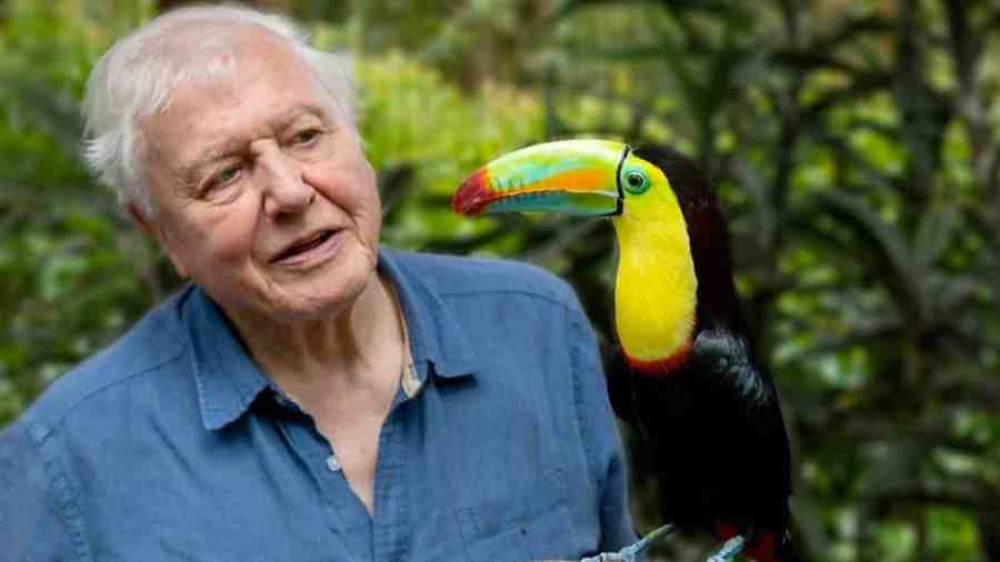 David Attenborough Life In Colour