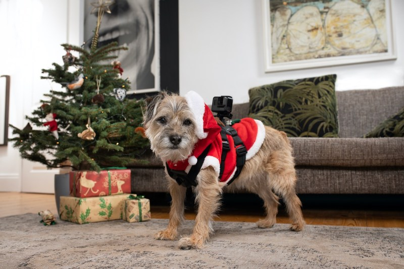 Christmas Snoop Dogs