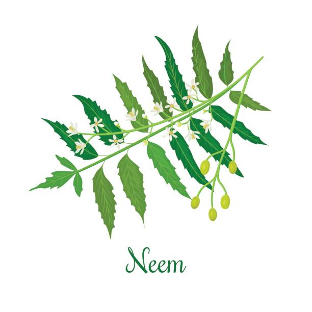 Home-made Face packs with Neem