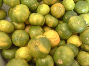 Green sweet oranges at the green grocers