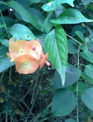 Hummingbirds love this plant