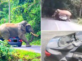 Elephant Squishes Car