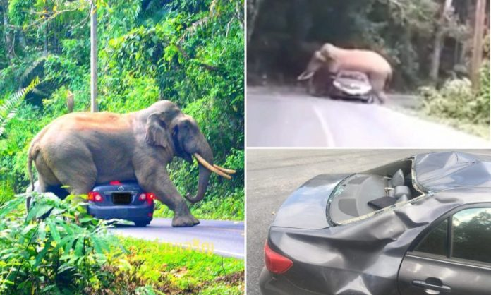 Elephant Squishes Car