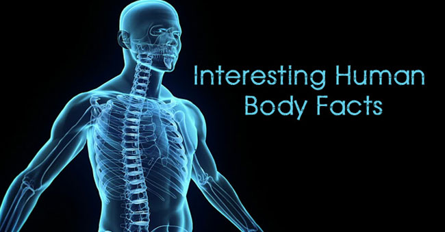 """""""HUMAN BODY – A MIRACLE"""""""