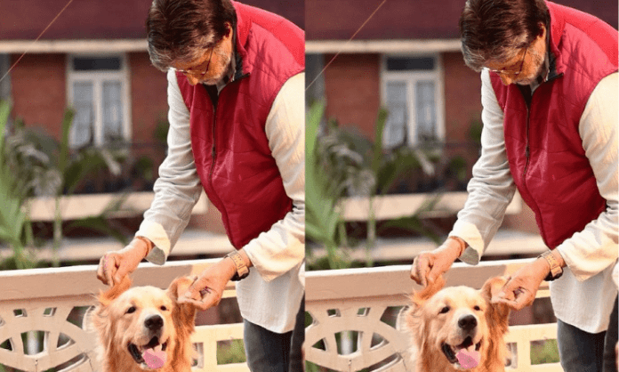 Big B shares picture posing with his 'co-star'