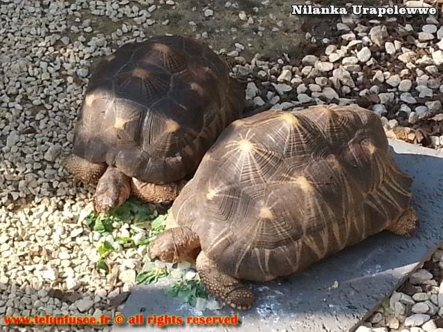nilanka-urapelewwe-blog-voyage-france-zoo-de-vincennes-travel-blog-telunfusee-10