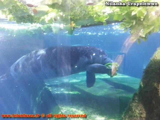nilanka-urapelewwe-blog-voyage-france-zoo-de-vincennes-travel-blog-telunfusee-12