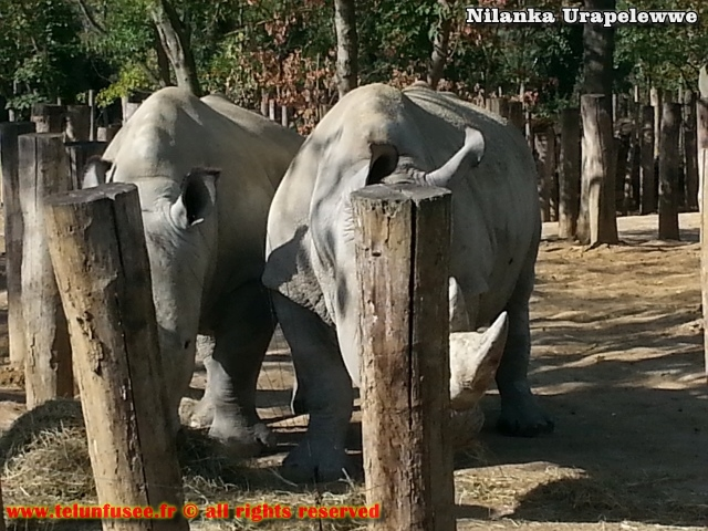 nilanka-urapelewwe-blog-voyage-france-zoo-de-vincennes-travel-blog-telunfusee-6