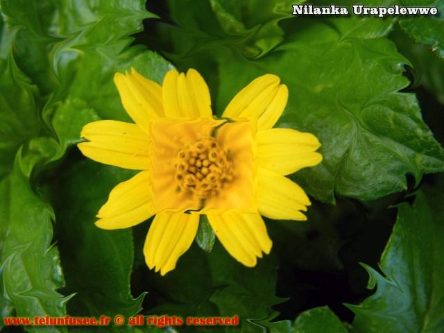 nilanka-urapelewwe-blog-voyage-sri-lanka-adams-peak-travel-blog-telunfusee-0