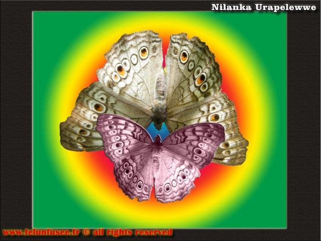nilanka-urapelewwe-blog-voyage-sri-lanka-adams-peak-travel-blog-telunfusee-1