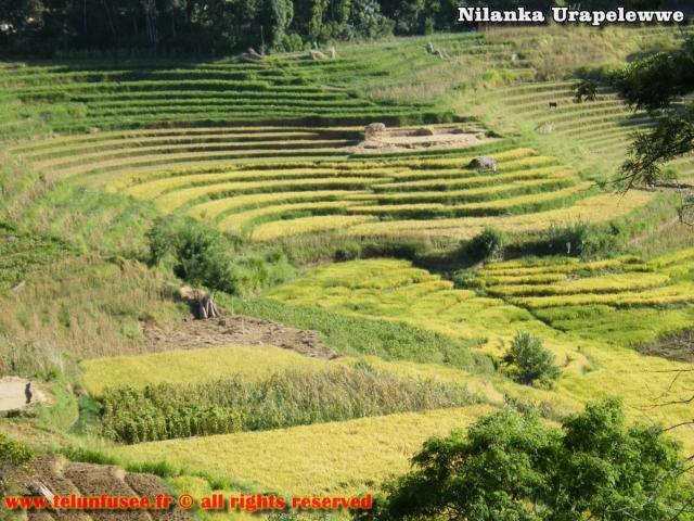 nilanka-urapelewwe-blog-voyage-sri-lanka-welimada-travel-blog-telunfusee-16 (2)