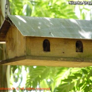 nilanka-urapelewwe-blog-voyage-sri-lanka-welimada-travel-blog-telunfusee-51