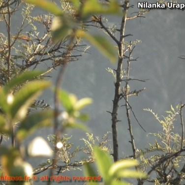 nilanka-urapelewwe-blog-voyage-sri-lanka-welimada-travel-blog-telunfusee-63