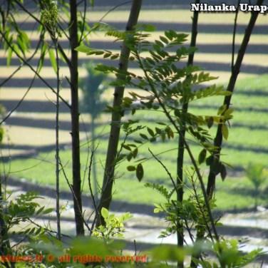 nilanka-urapelewwe-blog-voyage-sri-lanka-welimada-travel-blog-telunfusee-69