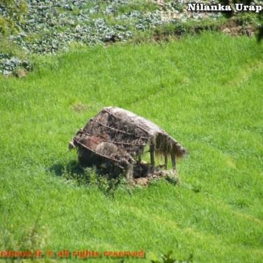 nilanka-urapelewwe-blog-voyage-sri-lanka-welimada-travel-blog-telunfusee-71
