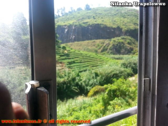 nilanka-urapelewwe-blog-voyage-sri-lanka-welimada-travel-blog-telunfusee
